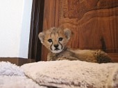 ...another one of the cubs!